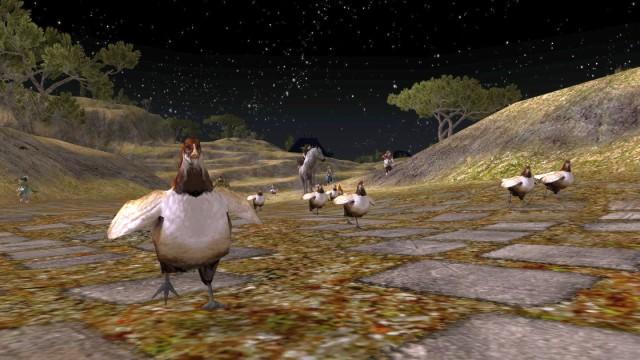 Chicken herding @ Sandson's farm