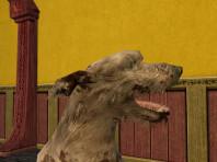 Sheepdog Known as Ruff