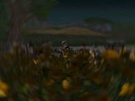 A Black Moors night